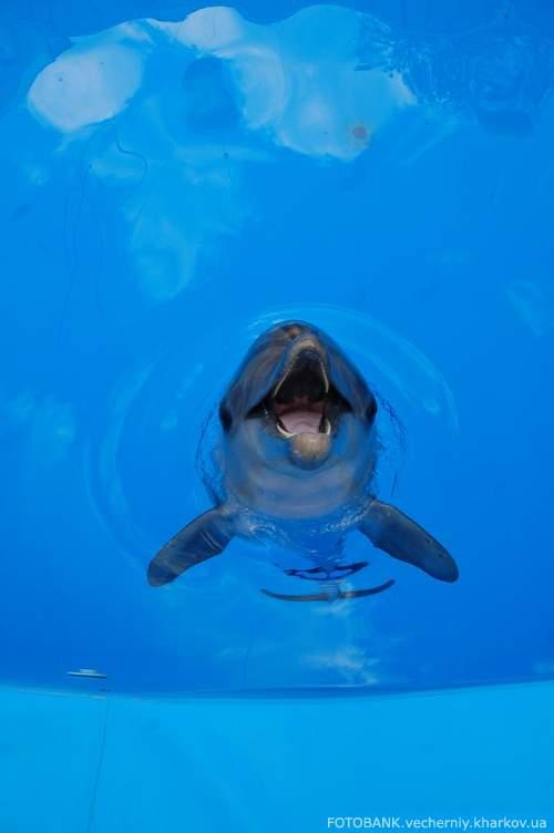 30 мая 2009 года в Харькове официально открылся дельфинарий. Накануне фотокорреспондент «Вечернего Харькова» посмотрел, как готовятся животные к своему первому выступлению.