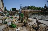 Динозавры и мамонты облюбовали центр Харькова