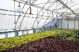 В Харькове заработала современная теплица для выращивания цветов