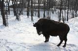 Зима в Харьковском зоопарке: просто красота