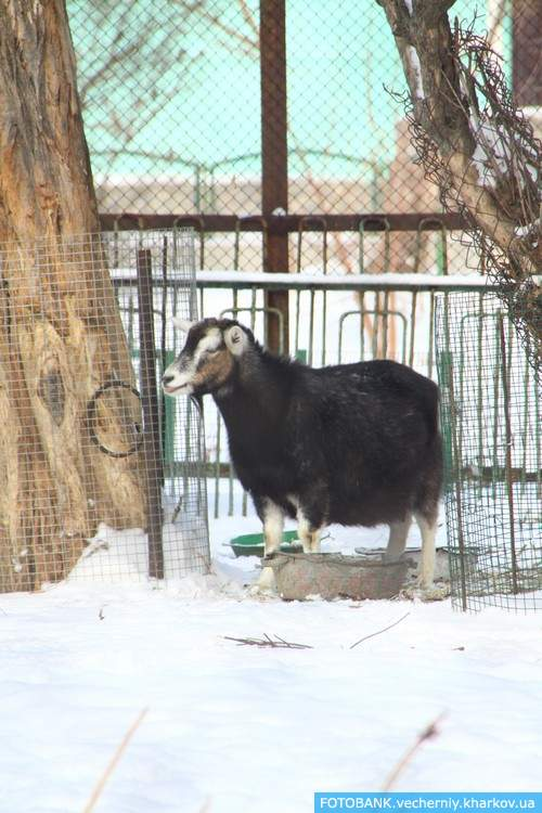 «има в 'арьковском зоопарке: просто красота