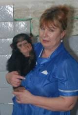 В Харьковском зоопарке появилась человекообразная Николетта