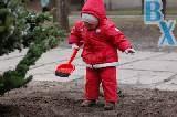 Как в Харькове деревья садят