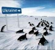 Морозы в Украине не отступают