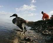 Власти Крыма: Нефть в море не сорвет курортный сезон