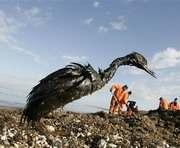 Мазут убил всех птиц на отдельных участках Керченского пролива
