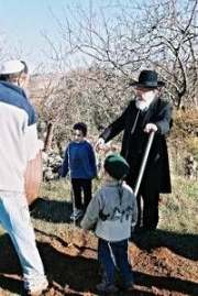 Зима пришла: евреи сажают деревья
