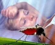 Малярию к нам завозят из Африки