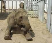 Харьковский слон мечтает о матриархате