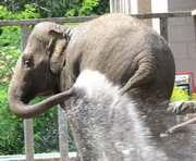 Самая большая леди Харьковского зоопарка приглашает гостей