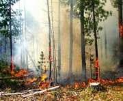 В Украине горят поля и леса
