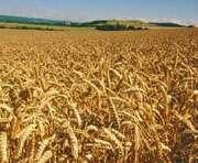 Харьковщине не хватает вагонов для вывоза зерна