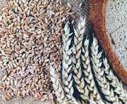 На Харьковщине собрали 2 млн. тонн зерновых
