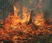В Харьковской области запрещено ходить в лес (Текст распоряжения)