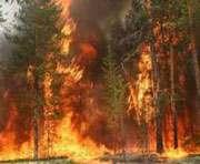 Лесной пожар на Харьковщине: новые подробности