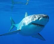 Акулы привыкают к харьковскому климату