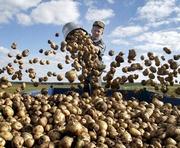 Хватит ли харьковчанам картошки на зиму