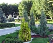Коммунальщики пересчитают все деревья в Харькове