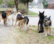 По Харькову бродят тысячи бездомных собак
