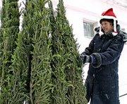 Когда в Харькове поставят новогоднюю елку