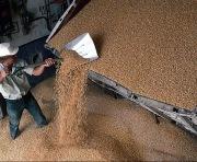 Харьковщина планирует выйти на большой урожай зерна