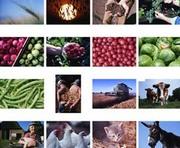 Аграриев Харьковщины поздравили с профессиональным праздником