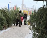 В Харькове каждой новогодней елке выдадут по электронному паспорту