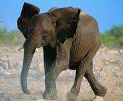 Не стой под слоном: в Таиланде пострадал украинский турист