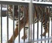 В Харьковском зоопарке – пополнение