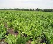На Харьковщине выросли закупочные цены на сельхозпродукцию