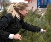 Непроданные елки пришлось отдать в зоопарк