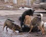 Когда в Харькове начнут строить вторую очередь приюта для собак