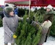 Перед Новым годом лесники продали более 900 тысяч елок