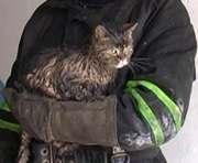 В Полтаве на пожаре спасли кота