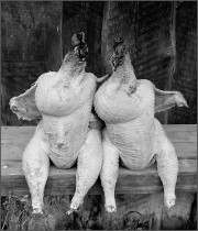 Не платить за воду: в мясе птицы ограничат содержание влаги