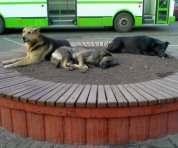 Куда девают отловленных собак в Харькове