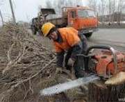 Харьковские энергетики переквалифицируются в лесорубы