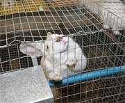 В Харькове пройдет форум кролиководов