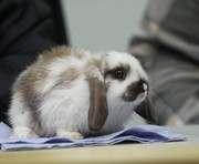 В Харькове пройдет мастер-класс по делам кроликов