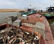 Европейцы не против покупать выловленную украинцами рыбу