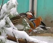 В харьковском зоопарке пройдет птичий праздник
