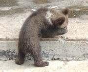 В харьковском зоопарке определят лучшего фотографа-анималиста