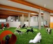 В Нью-Йорке открылся ночной клуб для животных