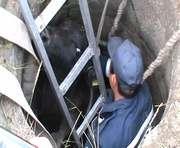 Харьковские спасатели достали из канализации... быка: видео-факт