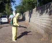 В Харькове взялись за блох в подвалах