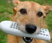 В США для собак откроют собственный телеканал