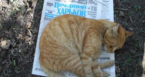 «Вечерний Харьков» празднует юбилей