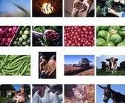 Украина и Нидерланды расширят сотрудничество в аграрной отрасли