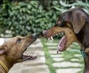 В Харькове «укололи» более двух тысяч домашних животных