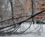 В Харькове стихия повалила два десятка деревьев